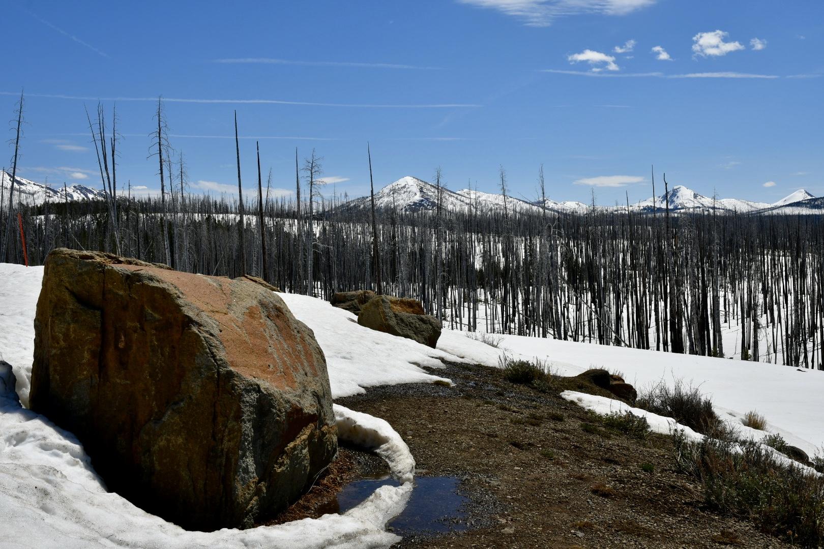Abgebrannte Baumstämme ragen schwarz aus Schnee, davor ein großer grau-roter Fels, dahinter schneebedeckte Berge vor blauem Himmel