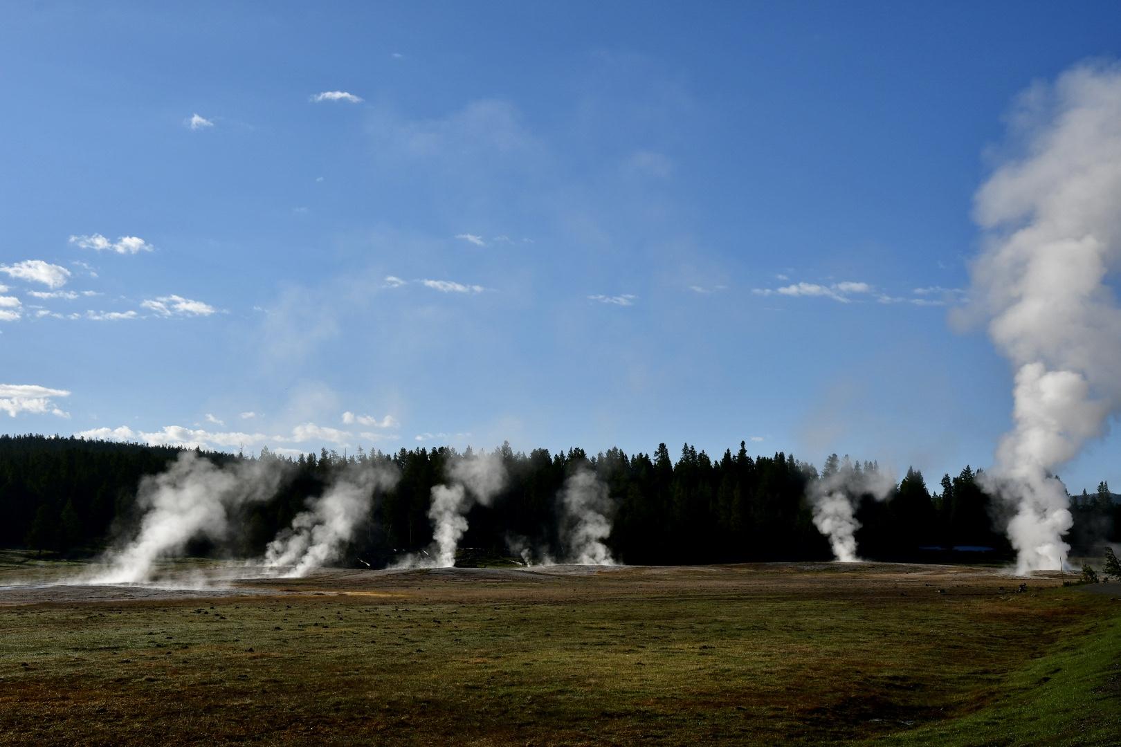 Mehrere Rauchschwaden wie Lagerfeuer auf einer Wiese vor Wald im Yellowstone Nationalpark