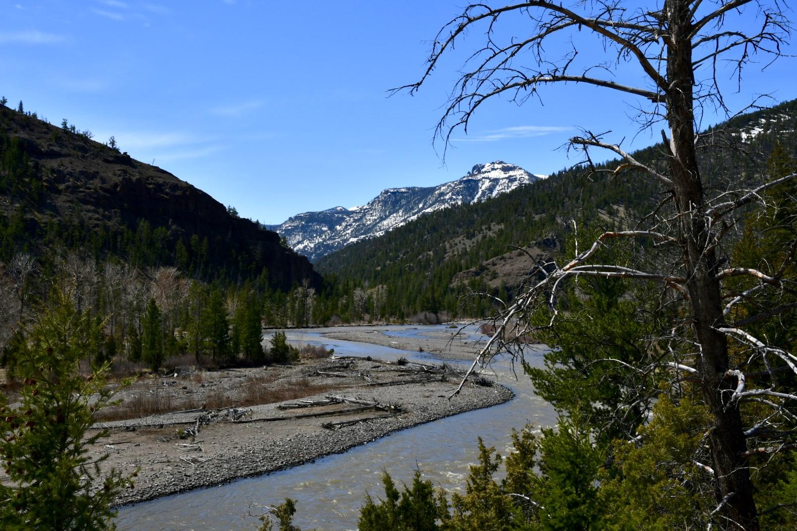 Enges Tal mit grün bewaldeten Berghängen und einem sich windenden Fluss mit breiten Kiesbänken und Treibholz, im Hintergrund schneebedeckter bewaldeter Berg