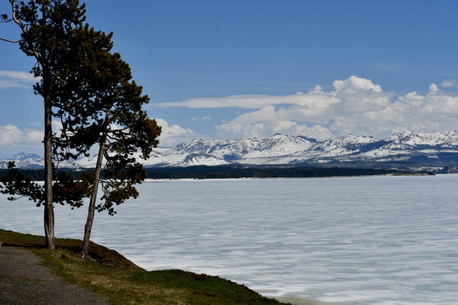 Hohe Pinie steht an zugefrorenem, mit Schnee bedecktem See, am anderen Ufer bewaldete verschneite Bergkette vor blauem Himmel mit weißen Cumuluswolken
