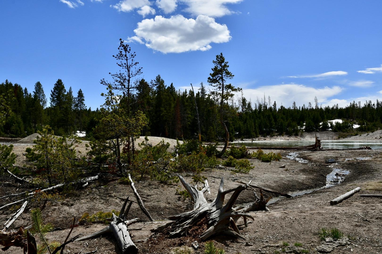 Baumgerippe vor grünem runden Teich in sanft gewelltem Waldgebiet im Yellowstone Nationalpark