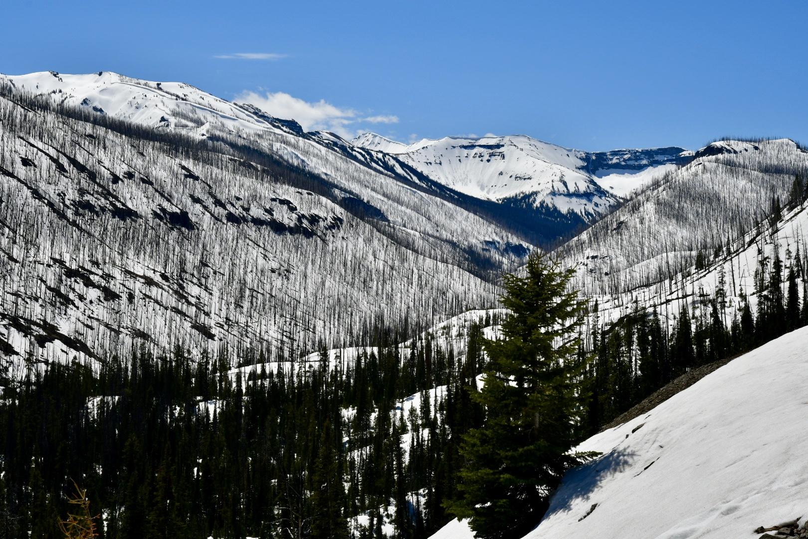 Schneebedecktes Gebirge im Yellowstone Nationalpark mit schwarzen Baumstämmen, die nach Waldbrand wie Mikados aus dem Schnee ragen